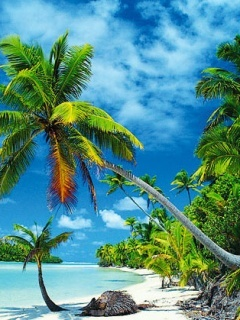 Tropical Mobile Wallpaper