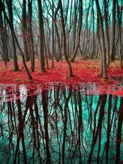 Fall Reflection Mobile Wallpaper