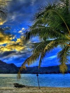 Tropical Blue Mobile Wallpaper