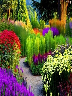 Colorful Garden Mobile Wallpaper