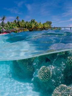 Underwater View Mobile Wallpaper