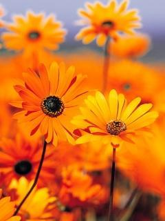 Yellow Flowers Mobile Wallpaper