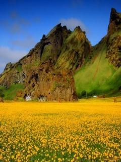 Yellow Field Mobile Wallpaper