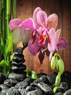 Orchidstone Mobile Wallpaper