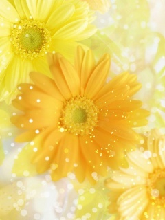 Nice Yellow Flowers Mobile Wallpaper