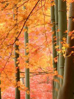 Autumn Leaves Mobile Wallpaper