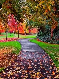 Autumn Colors Mobile Wallpaper