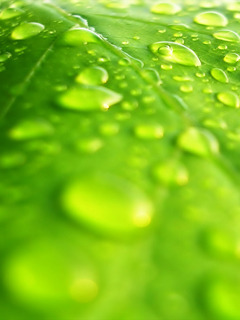 Drops On Leaf Mobile Wallpaper