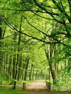 Green Nature Way Mobile Wallpaper
