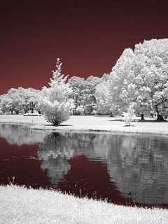 Reflection Winter Trees Mobile Wallpaper