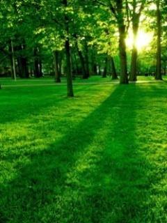 Green Nature Mobile Wallpaper