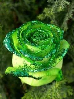 Green Rose Mobile Wallpaper