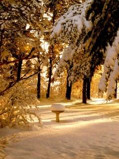 Winter Morning View Mobile Wallpaper