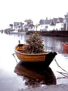 Tree On Boat Mobile Wallpaper