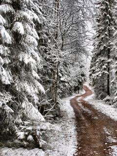Snow Nature Mobile Wallpaper