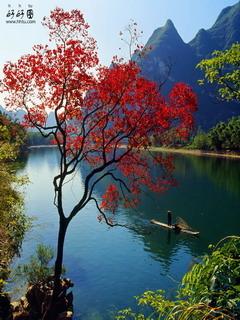 Big River Red Tree Mobile Wallpaper
