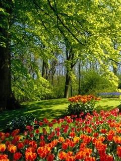 Spring Flowers Mobile Wallpaper