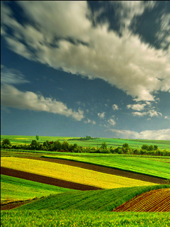 Nice Field View Mobile Wallpaper