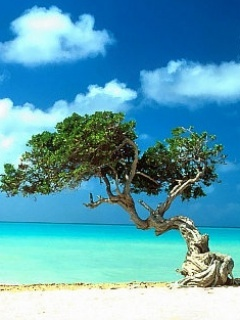 Tree On Beach Mobile Wallpaper