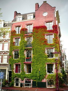 Amsterdam House Garden Mobile Wallpaper