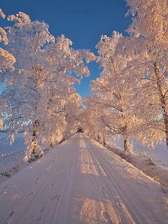 Winter Road Mobile Wallpaper