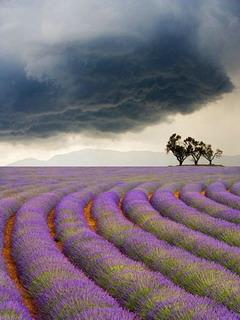 Provence In France Mobile Wallpaper