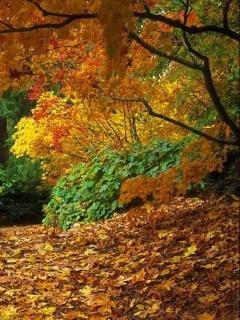 Autumn Fall Leafs Mobile Wallpaper