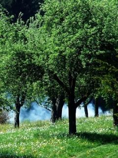 Green Trees Nature Mobile Wallpaper