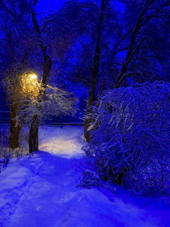 Blue Winter Night Mobile Wallpaper
