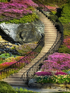 Wonderful Steps Mobile Wallpaper