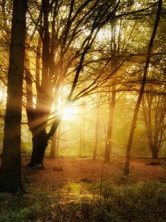 Forest Sunset Mobile Wallpaper