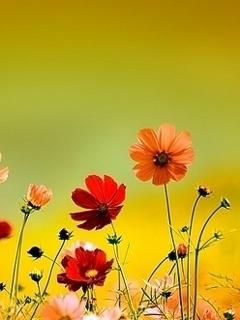 Cute Flower Mobile Wallpaper