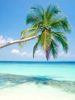 Tropical Island Maldives Mobile Wallpaper
