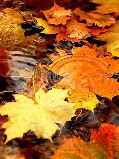 Autumn Leafs Mobile Wallpaper