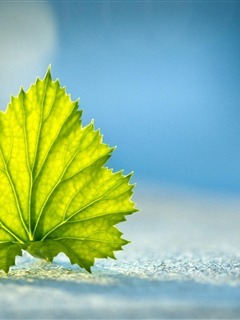 Alone Green Leaf Mobile Wallpaper