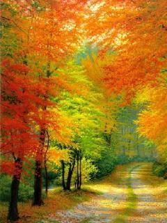 Autumn Colors Road Mobile Wallpaper