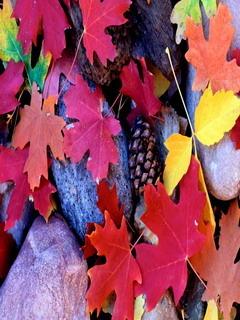 Autumn Colors Leafs Mobile Wallpaper