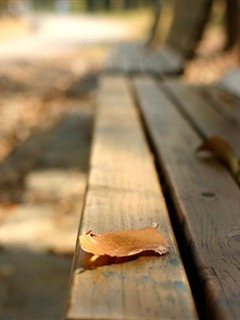 Alone Leaf  Bench Mobile Wallpaper