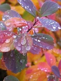 Drops Colors Leaf Mobile Wallpaper