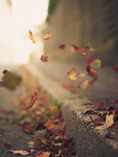 Autumn Leafs On Road Mobile Wallpaper