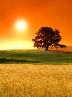 Field And Sunrise Mobile Wallpaper