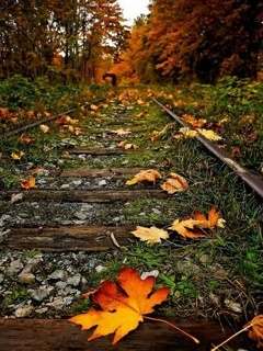 Autumn Train Track Mobile Wallpaper