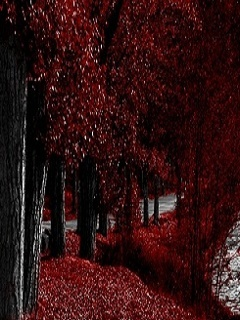 Red Autumn Nature Mobile Wallpaper