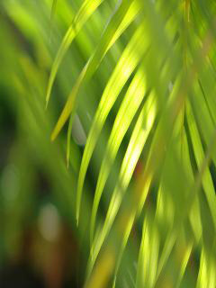 Soft Grass Mobile Wallpaper