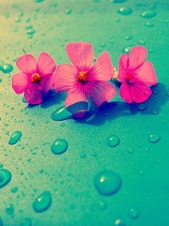 Flowers And Drops Mobile Wallpaper