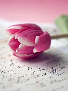 Lovely Tulip Mobile Wallpaper