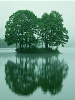 Green Trees Reflection Mobile Wallpaper