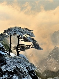 Mountains And Tree Mobile Wallpaper