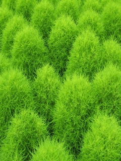 Green Grass Mobile Wallpaper