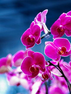 Purple Orchids Mobile Wallpaper